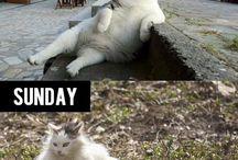 too funny! / by Kiki Bergman