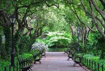 gardens / by Toula Korelis-Barron