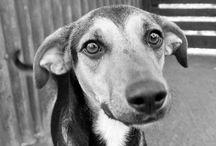 SRD / Vira-Lata / by Amo Cachorros Blog