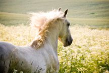 Horses ♥ / by marleigh rhue