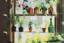Kitchen / My house / by Adrienne Kenyon
