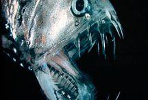 Fish / by David Wingo