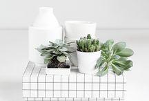 ♢ Plants ♢ / Plants indoor / by Clik Clk