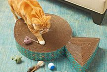 DIY Cat Projects / by MCAS Pets