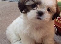 Cute Pets! :) / by Nicole Strasburger