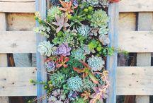 Garden ideas / by Elisabeth Crowe