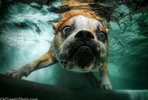Hund / by Lyli Leyva