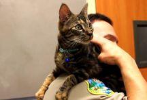 CatsCatsCatsCatsCatsCats / by Silversage Healthnutrition