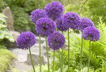 Zone 3 Perennials and Bulbs / by Rebecca Feist