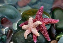 Stargazing / by Cathy Budjenska... encouragemenow.com