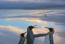 Birds 2 / by Rochelle G