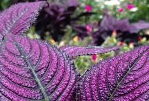 Cool Flowers / by Matt Gentile
