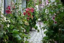 Come into the Garden / by Daphne Ellen