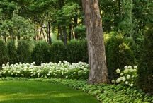 landscaping / by Colly Golightly