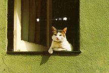 Little Kitties / by Rain Harry