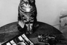 Cats'photographies / by Kitiza Perché