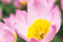 Gardening & Landscaping Tips / by Sarah Dezinski