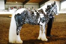 Horses / by Ashley Renae