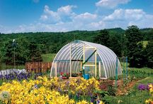 The Backyard Market / I have a one-acre plot on which I grow veggies and fruit, raise chickens for eggs, and keep bees. Here's my blog' http://thebackyardmarket.blogspot.com/ / by Darcy Poquette