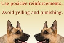 Pet training / We recommend positive reinforcement for training pets. / by Brighton Veterinary Hospital