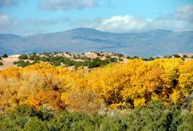 my New Mexico / by Joan