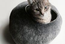 Cats / by Barbara Beall