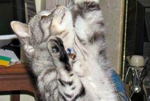 Cat captions / by Claire Toplis