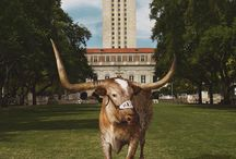 All Things Bevo / This board is dedicated to the beloved University mascot, Bevo. / by University Co-op