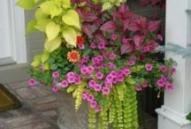 Container gardens / by Cindy Reigle Orcutt