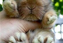 Easter bunny / by Adeline Vasilev
