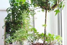 House Plants / by B Jasmin (BK)