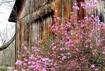 Old barns / by Ruth Riley