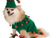 Doggie Costumes / by Eileen Powers-Twichell