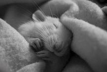 Ratties :) / by Sarah Lynn