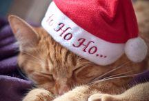 Christmas! / by Johanna Driscoll