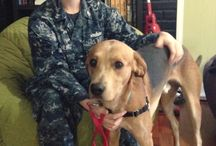 Anchors Aweigh - Navy Stories / by Pets for Patriots