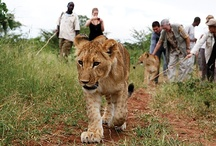 Exotics: Africa / Tauck's Africa tours and safaris are compelling and intriguing, from the Great Pyramids to the savannahs of the Serengeti. These Tauck journeys and safaris are the best in Africa tours today! / by Tauck
