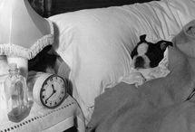 Dogs....dogs...dogs.... / by Penelope Rankin