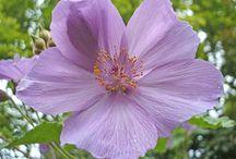 Flower / by Sally Crist Seier