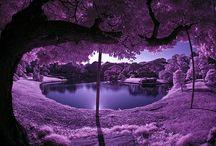 purple-rific! / by Emily Anne