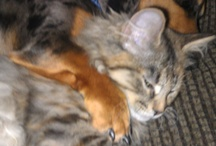Fur-baby LOVE!! / I have 2 dachshunds, 1 kitten, and a fish!  We love our pets!!  <3  / by Melissa Jackson