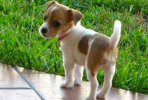 Cute pets / by Linda Davis