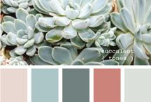 Succulents / by Janeen Home Decor