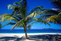 **Palm Trees  / by Dixie