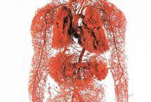 Body &  Health / by Kasia Borysionek
