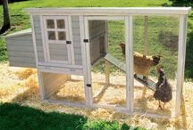 Chickens / by Catherine North