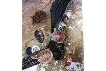 TURTLES / by Sherri Carter