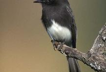 Birdies / by Mallory Spann