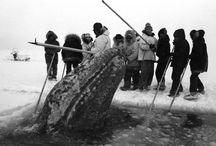 North Slope History / by Ilisagvik College