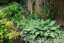 Beautiful Shade Gardens / by Pat Cramer Kennedy